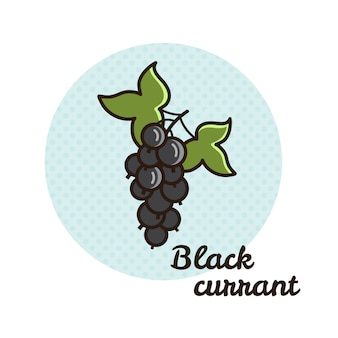 Vector illustration of black currant.
