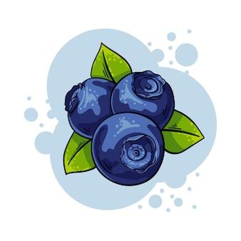 Vector illustration blueberries