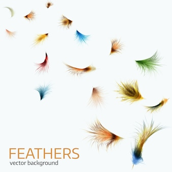 Vector illustration of  colorful  exotic feathers