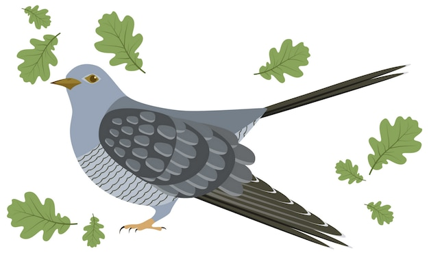 Vector illustration of cuckoo