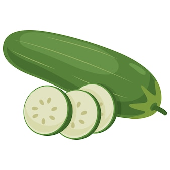Vector illustration of cucumber