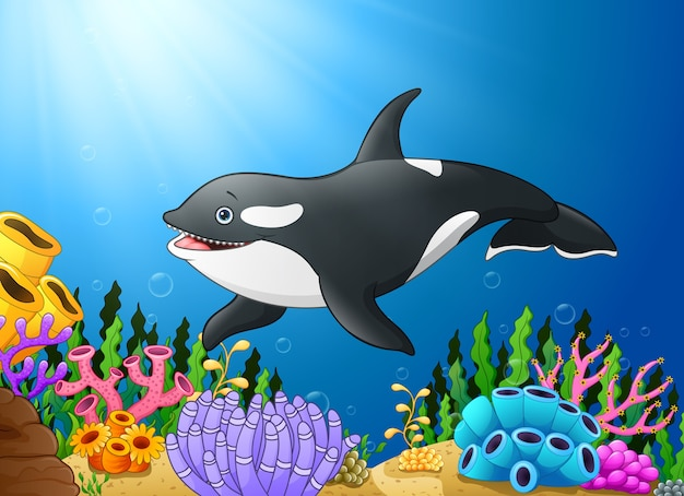 Vector illustration of cute killer whale under water