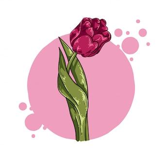 Vector illustration flower tulip