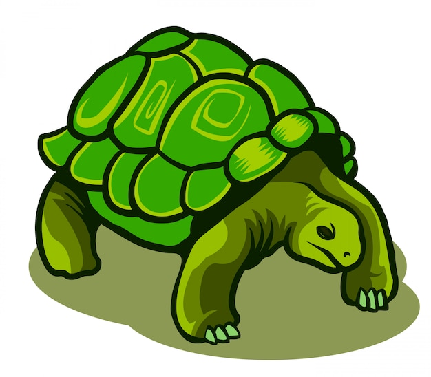 Vector illustration of galapagos turtle