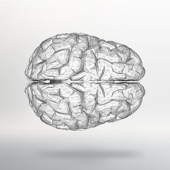 Векторная иллюстрация человеческого мозга. структурная сетка полигонов. абстрактный фон вектор творческой концепции. молекулярная решетка. многоугольные фирменные бланки и брошюры в стиле дизайна.