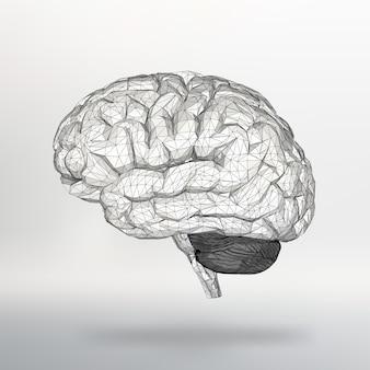 Векторная иллюстрация человеческого мозга структурная сетка многоугольников аннотация креативная концепция вектор