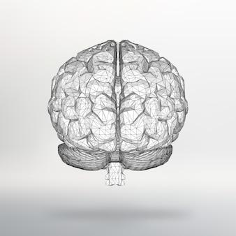 Векторная иллюстрация человеческого мозга. структурная сетка полигонов.