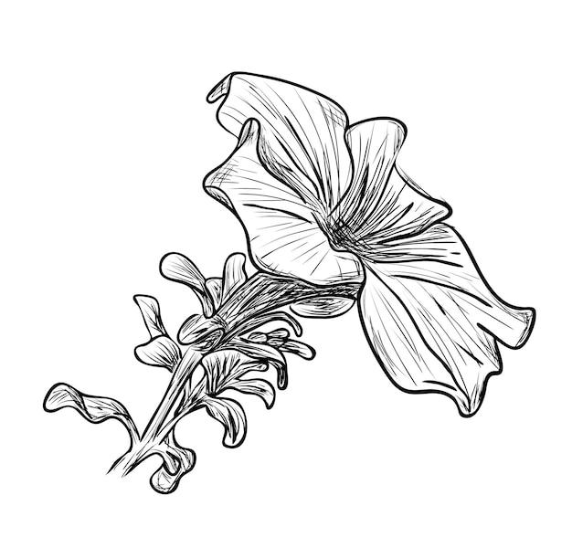 Векторная иллюстрация, изолированный эскиз цветка петунии в черно-белых тонах, наброски оригинальный ручной росписью рисунок