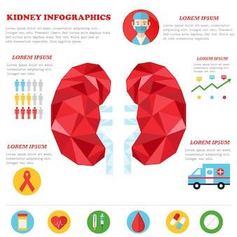 Vector illustration of kidneys with medical icons.