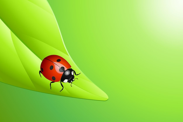 Vector illustration of a ladybug on a leaf