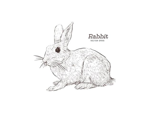 白い背景にウサギの彫刻のベクトル図