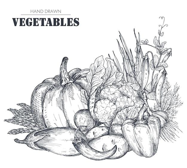 Векторная иллюстрация рисованной векторной фермы овощей в стиле эскиза