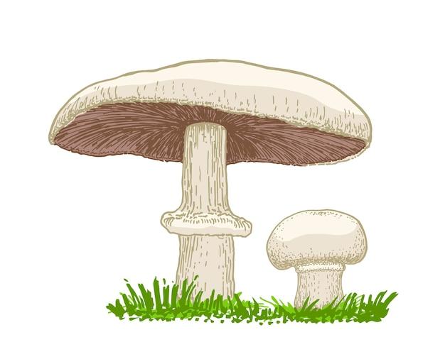 Векторная иллюстрация грибов шампиньонов, растущих в траве. ручной обращается стиль грибной эскиз