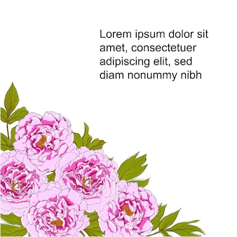 Vector  illustration of peony flowers