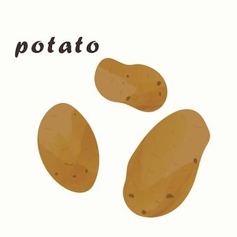감자의 벡터 일러스트 레이 션. 흰색 배경에 고립.