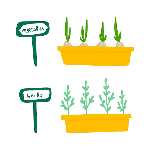양파와 파슬리 두 냄비의 벡터 그림. 야채와 허브라는 단어가 있는 식물과 표지판이 있는 상자.