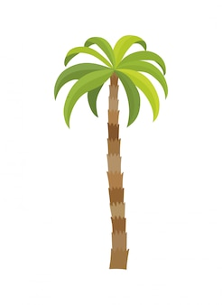벡터 일러스트 레이 션 야자수 고립입니다. 코코넛 나무. 야자수. 관광, 여행 상징, 기호
