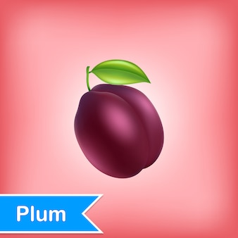 Vector illustration of plum