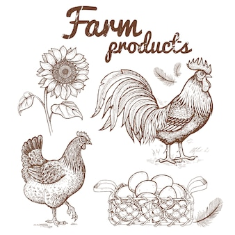 Vector illustration of a rooster, chicken and basket with eggs,