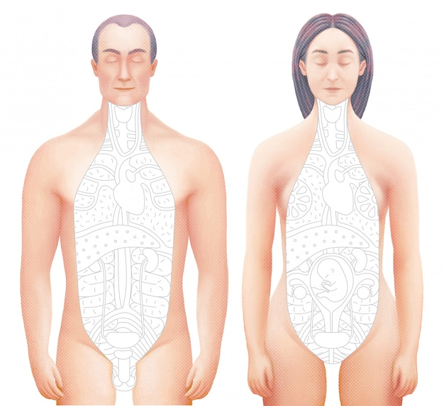 Vector illustration of sected bodies of man and woman