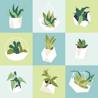 Векторная иллюстрация набор стеклянных флорариумов и бетонных горшков с растениями. различные суккуленты, кактусы и тропические листья. бесшовные модели.