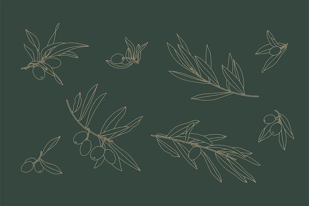 線形アイコンオリーブの枝のベクトルイラストセット。オリーブとの組成。花の背景。