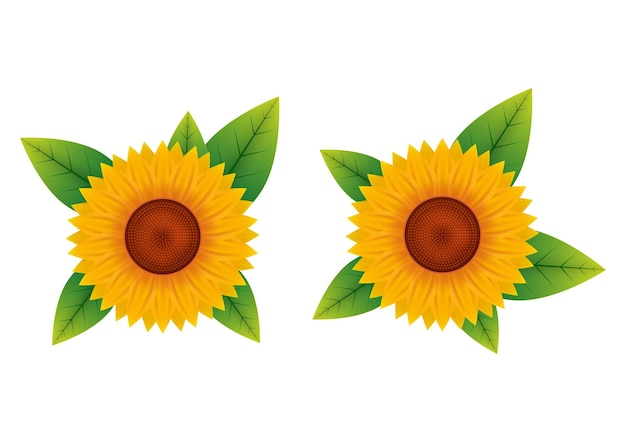 Vector illustration of sunflower top view isolated