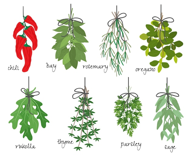 Vector illustration with eight different bunches of medicinal aromatic herbs