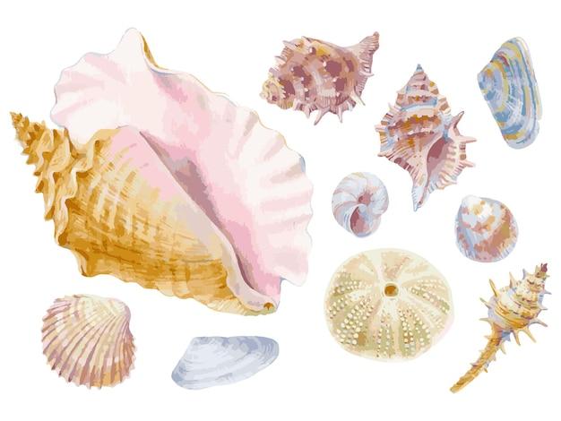 Векторные иллюстрации с рисованной акварель ракушки, изолированные на белом фоне.