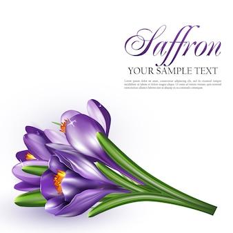 サフランの花のベクトル図