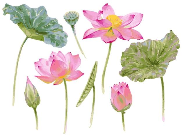 白で隔離される蓮の花と葉の水彩画のセットでベクトルイラスト。