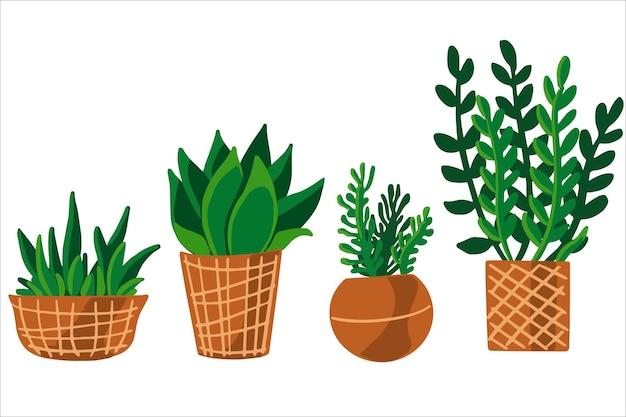背景のないベクトルイラスト。屋内植物のセット、鉢植えの花。