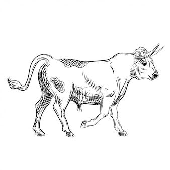 Vector image of a bull