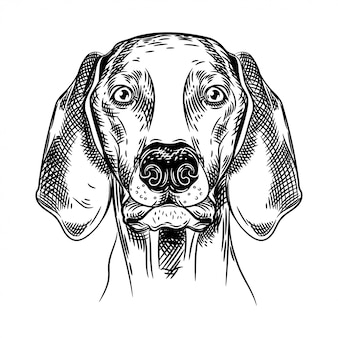 Vector image of a hunting dog.