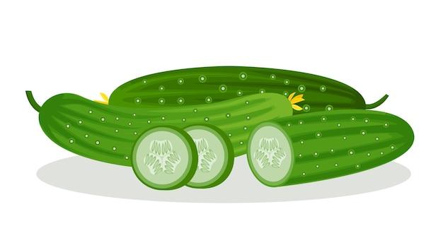 きゅうりとスライスのベクトル画像、白い背景で隔離。新鮮な野菜。菜食主義。