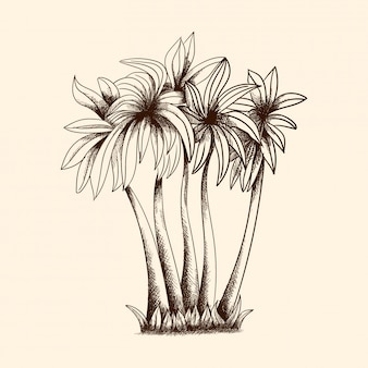Векторное изображение тропических пальм с плотной кроной и травой.