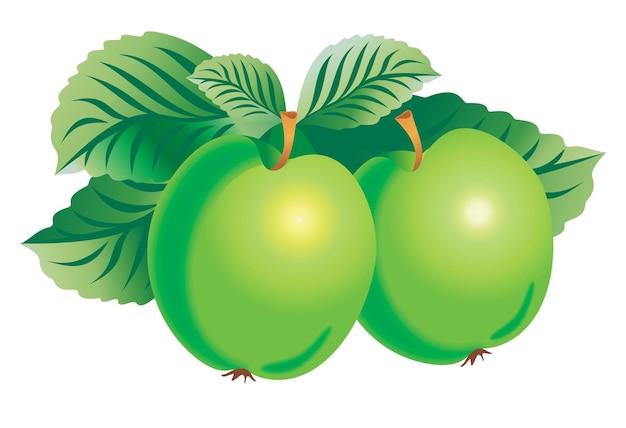 두 개의 녹색 사과의 벡터 이미지