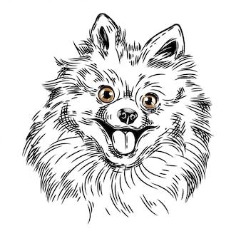 Vector image of a pomeranian dog