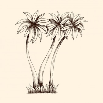 Vector image of tropical palm trees with dense crown and grass.