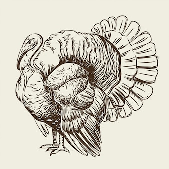 Vector image of a turkey.