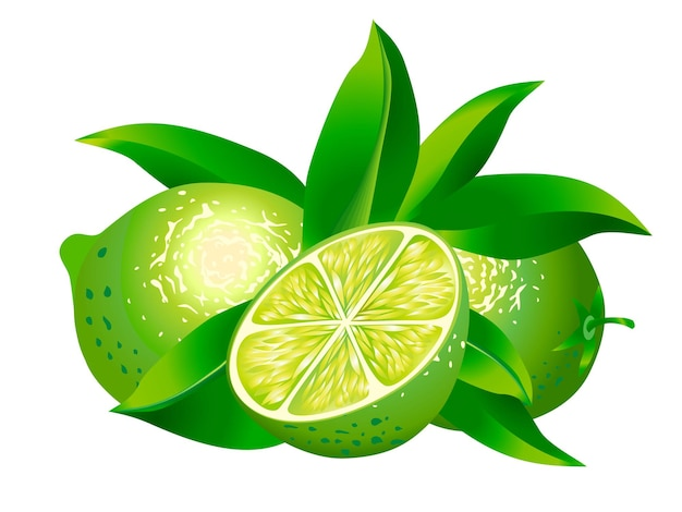 Vector  image of two limes