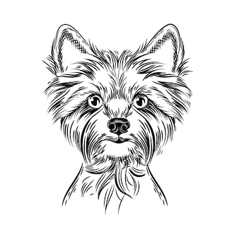 Vector image of a yorkshire terrier