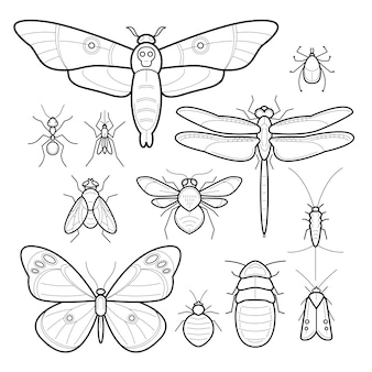 Vector insects. set.