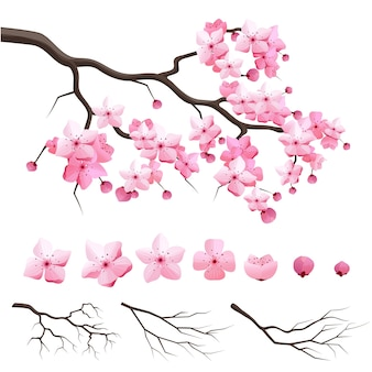 Vector japan sakura cherry branch with blooming flowers. design constructor with blooming cherry branch