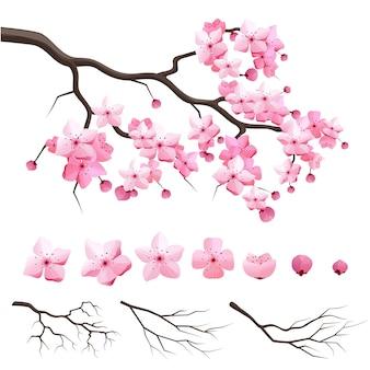 Vector giappone sakura ramo di ciliegio con fiori che sbocciano. costruttore di design con ramo di ciliegio in fiore