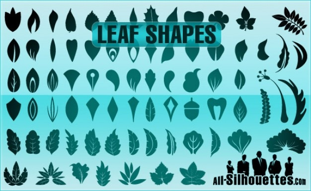Vector leaf shapes silhouettes