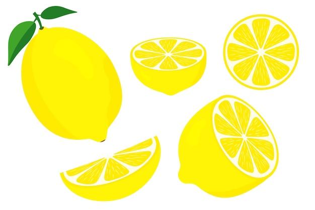 Векторные лимоны. свежие фрукты лимона. половинку лимона и нарезать ломтиками с зелеными листьями. нарезанный лимон. витамин с. долька лимона