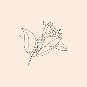 Вектор линейной ботанический значок и символ сандалового дерева