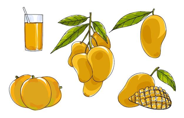 Vector mango set hand drawn cute art illustration