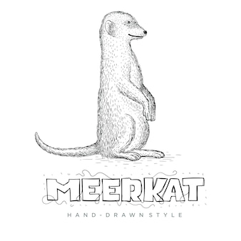 Vector of meerkat standing straight. hand drawn animal illustration